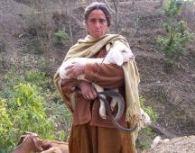 Solan Herder