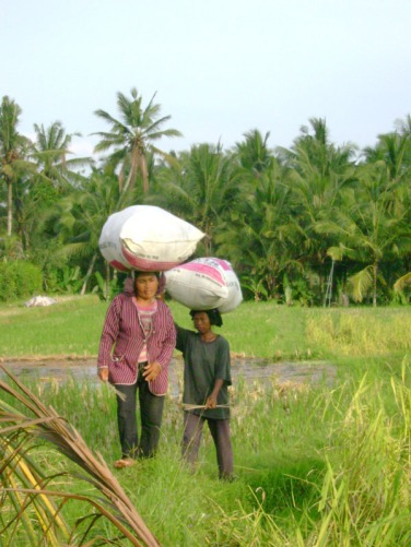 Rice Harvesters