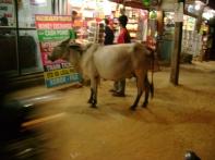 Goa Cow