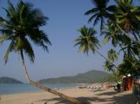 Goa Palm