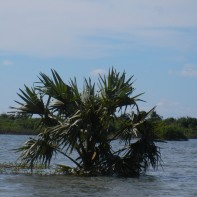 Palm Above the Water