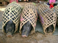 Hogs in Baskets