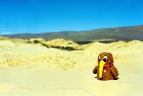 Traveling Kiwi at Kalahari
