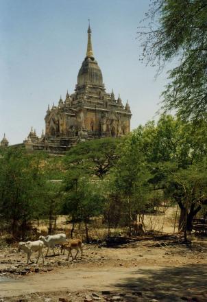 Bagan Temple