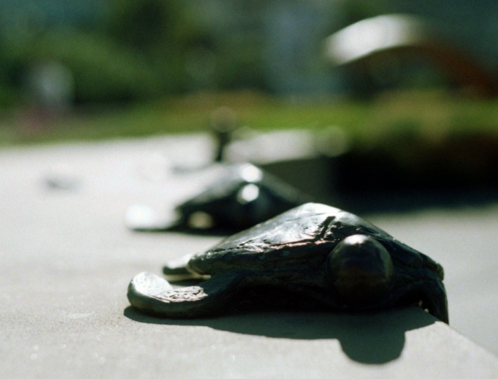 Turtles on the Go
