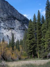 Yosemite Granite and Redwoods