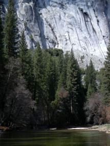 Merced River and Redwoods