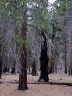 Valley Woods