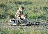 Big Five - Leopard