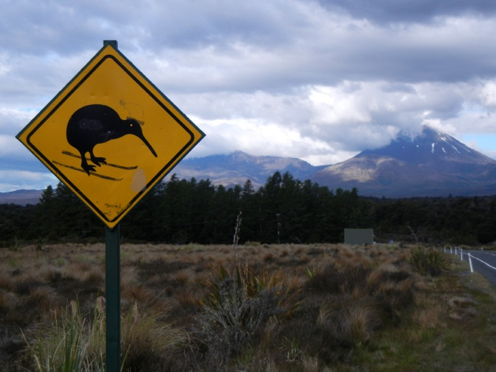 Kiwi at Tongariro