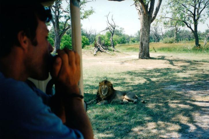 Blues meet Lion King
