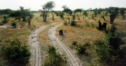 Moremi National Park