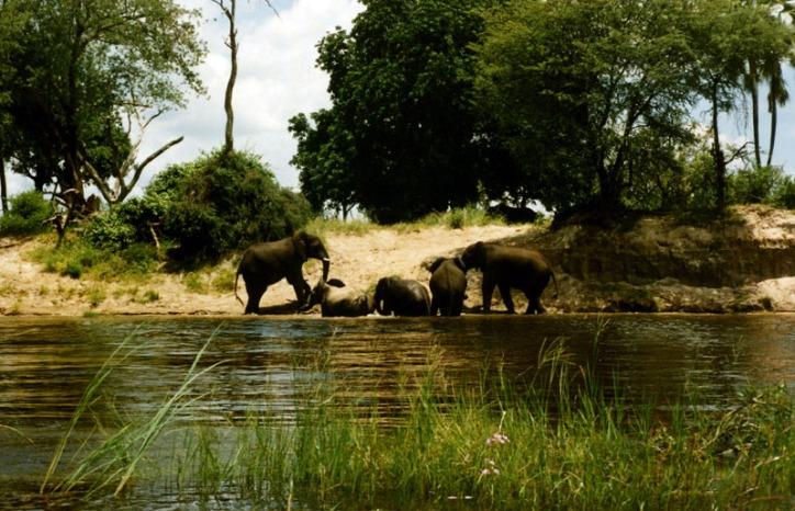 Elephants Bathe