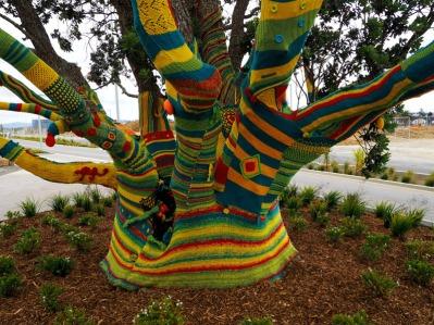 Warm Pohutukawa Tree