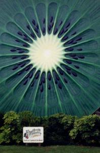 Giant Kiwi