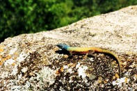 Matopos National Park